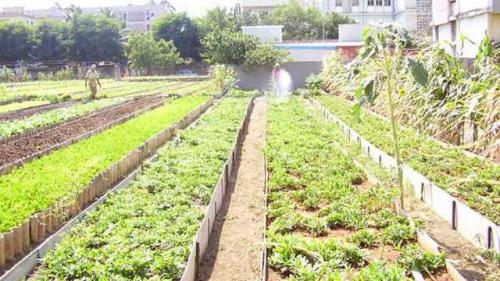 cuba-agriculture-b8699.jpg